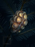 Donut nudibranch - Doto Doto greenamyeri - Olympus TG-5 in Sea Frogs Housing, AOI UCL-900, Minigear MS-03 Snoot Diving Light, 1/400, F/4.9, ISO 100